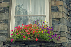 Window Flowers Stock Images