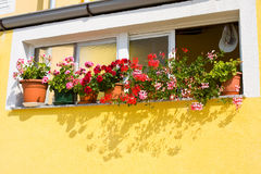 Window with Flowers, Dalmatia, Zadar, Croatia Stock Photos