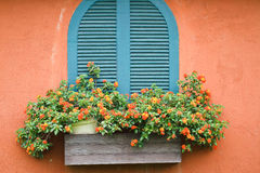 Window with flowers. Window with flowers decoration exterior home stock photography