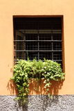 Window with flowers and grate Royalty Free Stock Image