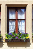 Window with flowers Royalty Free Stock Images