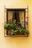 Window with flowers in an old town from Tuscany. Orange wall with closeup of a window with flowers in a vintage town from Tuscany, Italy Stock Photos