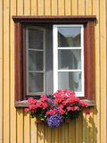 Window and flowers Royalty Free Stock Images