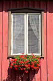 Window Flowers Royalty Free Stock Images