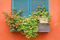 Window with flowers. Royalty Free Stock Photos