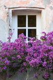Window with flowers in Saint Tropez Stock Photo