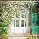Window and flowers. Shabby Chic Background with window and flowers Stock Photos