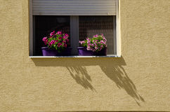 Window with flowers. And shadows on wall Stock Images