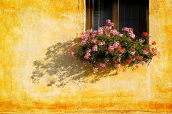 Window flowers wall Stock Image