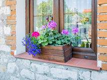 Window flowers in a wooden box Royalty Free Stock Photo