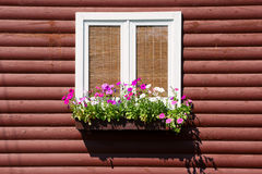 Window with flowers on wooden wall. Window with flowers on house wooden wall Stock Photography