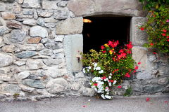 Window with flowers Stock Images