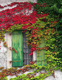 Window with foliage. House wall with open wooden window surrounded by  plants Royalty Free Stock Images