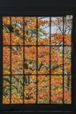 Window frame filled with red maple leaves. Saw at Kyoto, Japan Stock Photo