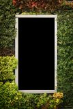 Window frame and plant Royalty Free Stock Photo
