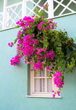 The window framed with flowers Stock Image