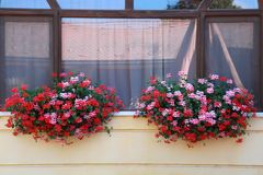 Window framed with fresh red flowers Royalty Free Stock Image