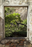 Window frames a tree in the jungle Royalty Free Stock Photo