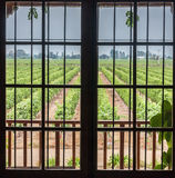 Vineyard in Colchagua Valley Chile royalty free stock photography