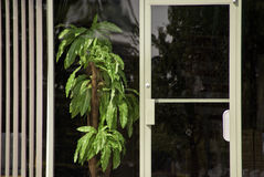 Window Front Royalty Free Stock Images