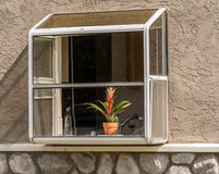 Window. Garden bay kitchen window with flower behind the glass Royalty Free Stock Image