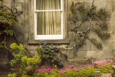 Window with garnening arrangement. Window of an english house with garnening arrangement Stock Photo