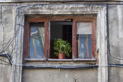 A window with a geranium in a pot Stock Photos