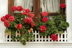 Window with geraniums Stock Images