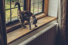 Window, Glass, Frame, Cat, Pet Stock Photos