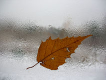 Window glass, leaf and rain drops Royalty Free Stock Images