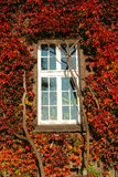 Window in grapevine leaves Stock Photos