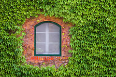 Window Through Green. Old building window surrounded by green ivy