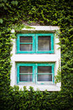 Window and green ivy Royalty Free Stock Image