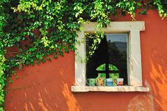 The Window. With green leaf Stock Photos