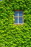 Window with green leafs. A tiny window with green leaves around stock photography