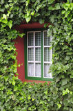 Window with green leafs. Facade of a house covered with ivy Stock Photos