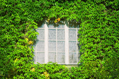 Window in green leaves. White window in green leaves, ecology Stock Photo