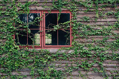 Window with Green leaves wall Stock Photo