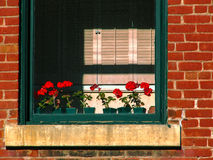 Window in Historic Building 2 Stock Image