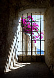 Window from History. Beautiful flowers outside the historic window of the La Merced Convent in Antigua, Guatemala Royalty Free Stock Image