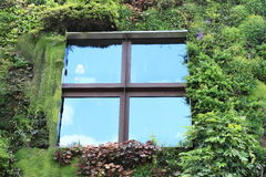 Window in house with plants Royalty Free Stock Images