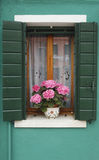 Window with hydrangea. A shuttered window of a house on the Venetian island of Burano, with a potted hydrangea on the windowsill Stock Photos