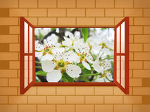 Window illustration with pear. Blossoms Stock Photo