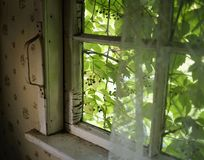 Window indoor old village house green leaves. Summer day sunlight royalty free stock photos