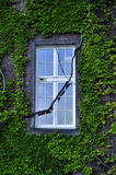 Window with ivied Stock Image