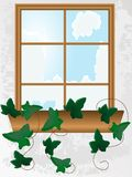 Window with ivy Royalty Free Stock Image