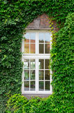Window with ivy Stock Photography