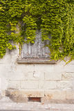 Window Ivy Royalty Free Stock Image