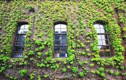 Window with ivy Stock Photos