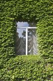 Window with ivy leafs Royalty Free Stock Photo